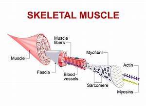 Myofascial Release  U2013 Optimum Energy And Wellness