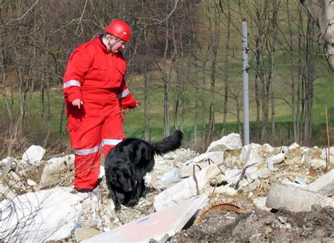 File Ee  Rescue Ee    Ee  Dog Ee   Png Wikimedia Commons