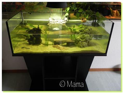 installation aquarium pour tortue