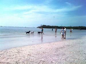 a truly great dog beach and salty dog gallery ts in fort myers beach florida