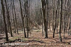 Werden Braune Zypressen Wieder Grün : schaumbergalm im nationalpark kalkalpen ~ Lizthompson.info Haus und Dekorationen