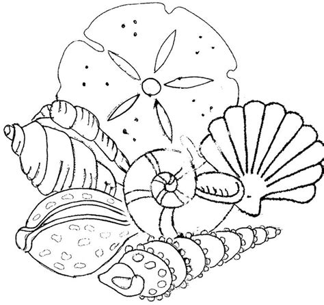 seashell coloring pages getcoloringpagescom