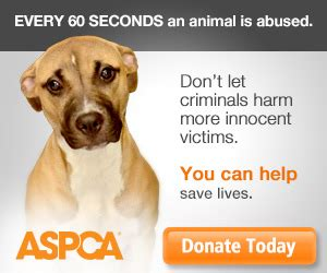 What Does The Aspca Stand For low cost spay neuter programs aspca