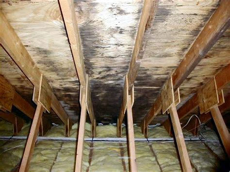 mold inspection accurate home inspections