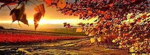 Autumn Vineyard Facebook Covers, Autumn Vineyard FB Covers ...