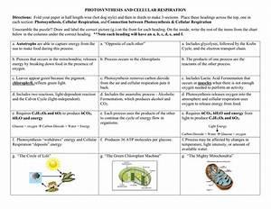 Concept Map  U2013 Photosynthesis And Cellular Respiration  U2014 Db