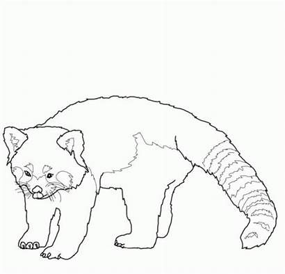 Coloring Panda Ranger Lone Printable Drawing Roter