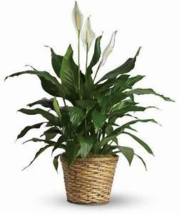 Five Indoor Plants That Absorb Humidity - Houz Buzz