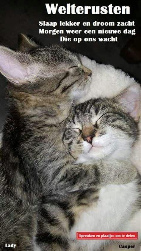 slaap lekker trusten images  pinterest