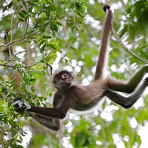 Arboreal Animals Pictures With Names