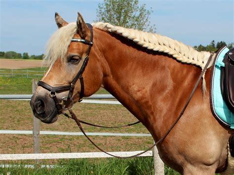 micklem trensenzaum test berichte fotos pferde und hunde