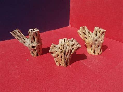 Spring Sale! 3 Pc. Cholla Cactus Skeleton Craft Wood Kit