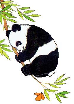panda graphics  animated gifs picgifscom