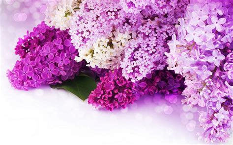 pink or purple flowers pink and purple flower backgrounds wallpaper cave