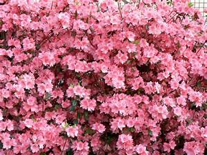 Welche Blumen Kann Man Essen : welcher blumenstrauss passt sweet home ~ Watch28wear.com Haus und Dekorationen