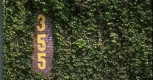 Wrigley Field Ivy Wallpaper - WallpaperSafari