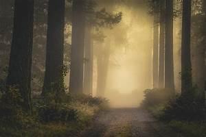 Nature, Landscape, Mist, Fall, Dirt, Road, Shrubs, Forest, Sunlight, Atmosphere, Trees, Finland