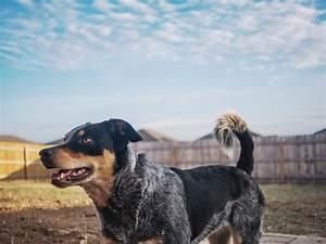 best outdoor dog beds reviews buyer39s guide With best outdoor dog beds reviews