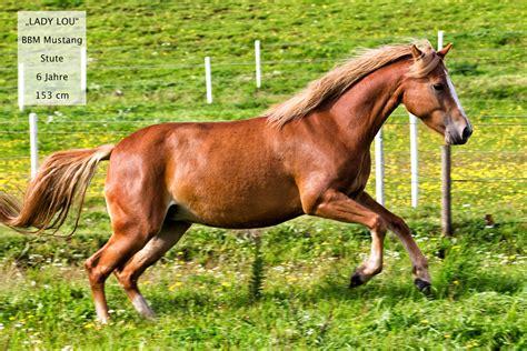 mustang pferde kaufen michael baganz pferdetraining