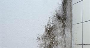 Schimmel Im Bad Beseitigen : schimmel entfernen dauerhaft beseitigen raum analyse ~ Sanjose-hotels-ca.com Haus und Dekorationen
