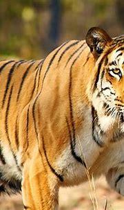 Visit The Wildlife Sanctuaries in West Bengal | LBB, Kolkata