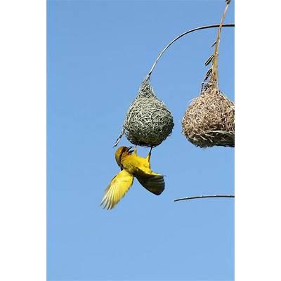 Pin by kkbelle NZ on Birds of AfricaPinterest