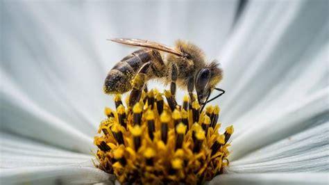 welcher honig ist der beste bl 252 tenhonig aus dem supermarkt im test welcher honig ist