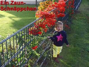 Doppelstabmattenzaun Anthrazit 8 6 8 : doppelstabmatten zaunfeld 8 6 8 extra dick b 225cm ab 29 99eur ~ Buech-reservation.com Haus und Dekorationen