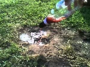 Comment Se Debarasser Des Taupes : se d barrasser des fourmis astuce jardinage comment se d barrasser des fourmis youtube ~ Melissatoandfro.com Idées de Décoration