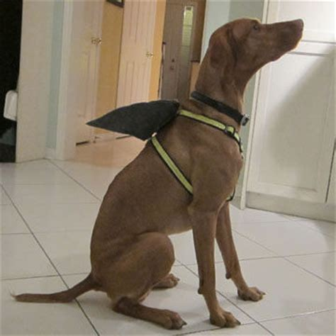 shark fin dog harness  steps  pictures