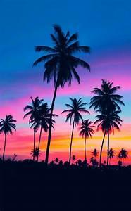 Coole Handy Hintergrundbilder : 42 richtig einzigartige bilder von palmen ~ Frokenaadalensverden.com Haus und Dekorationen