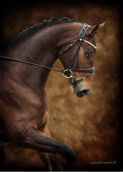 Horse Animals Wallpapers Desktop Animal Backgrounds Mobile