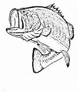 Fish Coloring Bass Pages Drawing Realistic Cod Smallmouth Walleye Drawings Draw Printable Getcolorings Getdrawings Detailed Paintingvalley Catfish sketch template