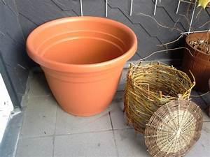 Kompost Für Balkon : rohmaterial balkonkompost ~ A.2002-acura-tl-radio.info Haus und Dekorationen