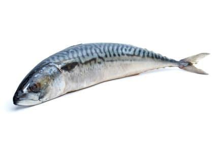 cuisiner du poisson recette maquereaux à la poêle recette maquereaux poêlés