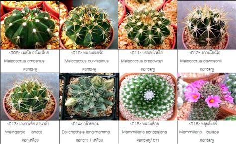 รวบรวมข้อมูล แคคตัสและไม้อวบน้ำ cactus&succulent (ฉบับ ...
