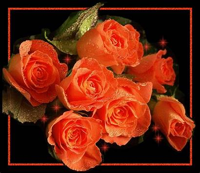 Roses Sparkling Framed Rose Flowers Gifs Flores