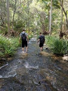 Tamborine National Park - Aussie Bushwalking