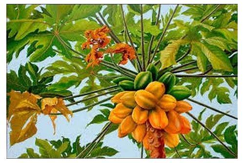 Download mp3 banana papaya :: verryosorre