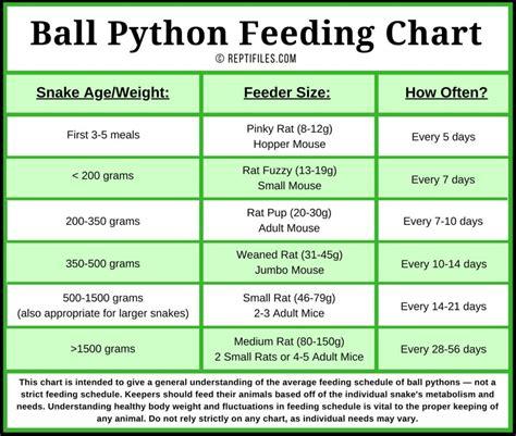 Ball Python Feeding Tips | ReptiFiles' Ball Python Care Guide