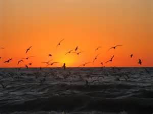 Naples Florida Beaches Sunset