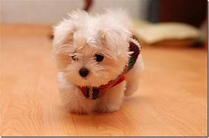 Extremely Cute Baby Animals Photos | Funny And Cute Animals