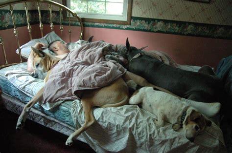 Sleeping Dogs Photo Contest Winners