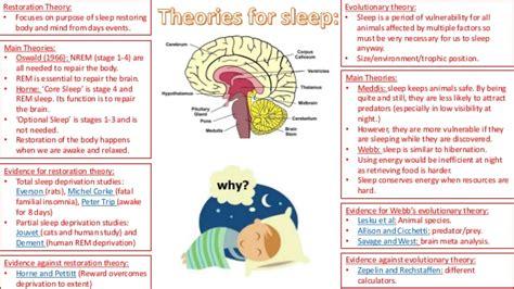 biological rhythms  sleep