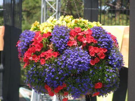 beautiful hanging baskets photo