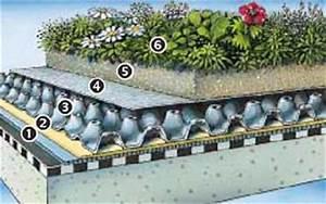 Extensive Dachbegrünung Aufbau : dachbegr nung zinco f r 10 qm dachfl che ebay ~ Whattoseeinmadrid.com Haus und Dekorationen