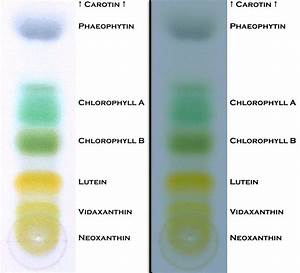 Good plant examples ofpaper chromatography lab | rf values ...