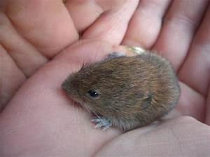 Wie Fängt Man Eine Maus : ich habe eine maus gefunden was nun bitte tipps geben tiere biologie natur ~ Markanthonyermac.com Haus und Dekorationen