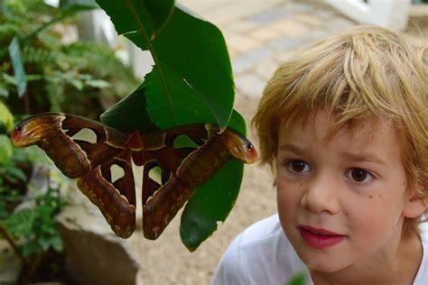 Garten Der Schmetterlinge Schloss Sayn by Garten Der Schmetterlinge 187 Schloss Sayn
