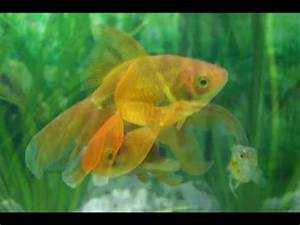 Fische Aquarium Hamburg : aquarium fische youtube ~ Lizthompson.info Haus und Dekorationen